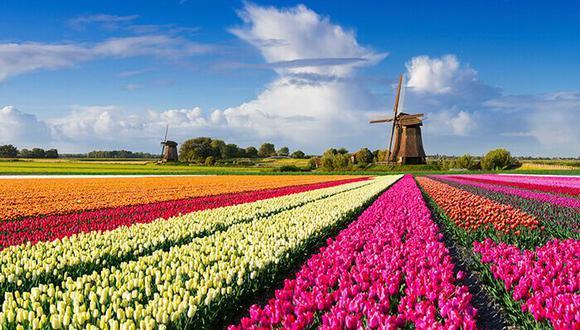 El Gobierno Neerlandés ha decidido cambiar el nombre oficial de Holanda a Países Bajos. En este artículo te explicamos las razones, costos y beneficios que obtendrá el país de los tulipanes a raíz de dicha modificación. (hollandisc.com)