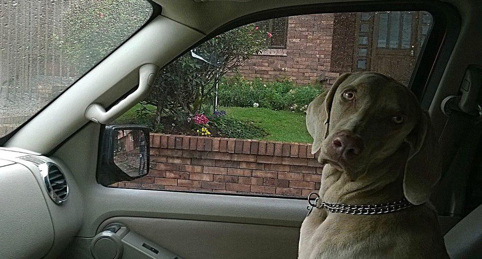 De un momento a otro, un pitbull se subió al auto de unos jóvenes. Cuando se dieron cuenta, este se había 'apoderado' de mucho más que el coche. (Foto: Referencial/Pixabay)