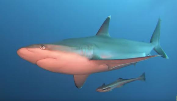 Buceadora se percató que el tiburón que estaba filmando se le acercaba sigilosamente, por lo que tomó una arriesgada decisión que le pudo costar la vida. (Foto: Captura YouTube)