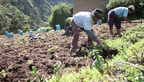 AGAP aseguró que presentará propuestas que impulsen el crecimiento del sector agrícola. (Foto: GEC)