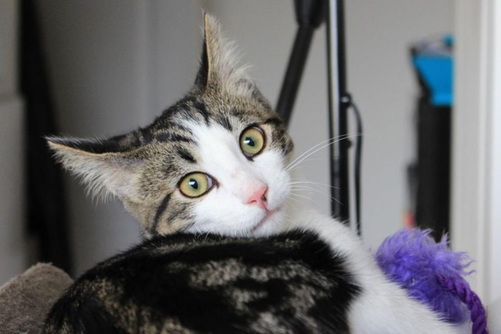 El gato quedó totalmente impactado al ver a la nueva engreída de la casa. (Pixabay)