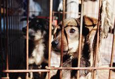 Mascotas: ¡Denunciemos el maltrato animal!