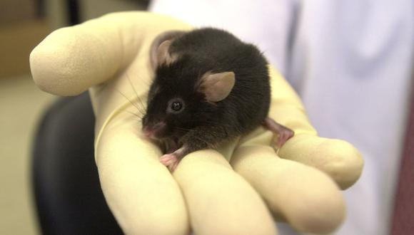 Restauran formación de recuerdos en ratones privados de sueño