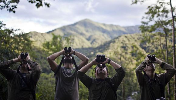 Juego de trinos: el avistamiento de aves en el Manu