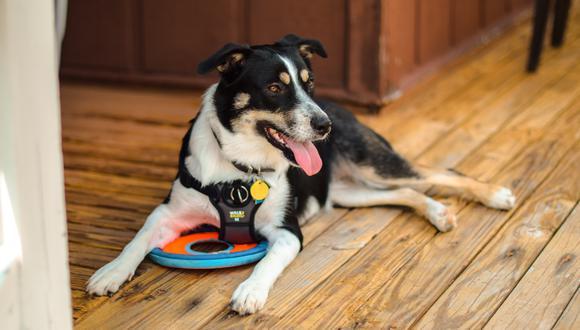 Los perros de asistencia siempre son preparados según la función que realizarán.