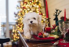 WUF: 3 recetas saludables para engreír a tu perro esta Navidad