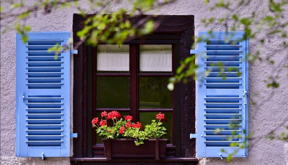 Seis plantas perfectas para darles color a tu hogar en invierno. (Foto: GEC)