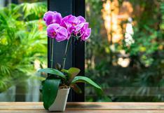 Consejos para mantener en buen estado tus orquídeas en casa | FOTOS