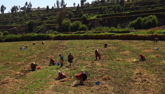 Los trabajadores agrarios podrán decidir si perciben el pago de la CTS y gratificaciones de forma semestral o incluido en su remuneración básica. (Foto: GEC)