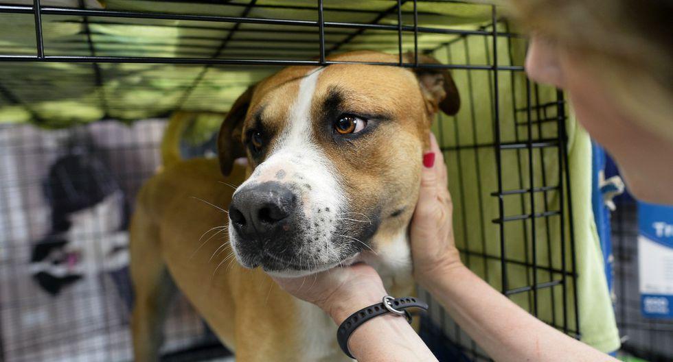 Los centro de animales del sur de Florida han extremado sus medidas por el coronavirus. (AFP)