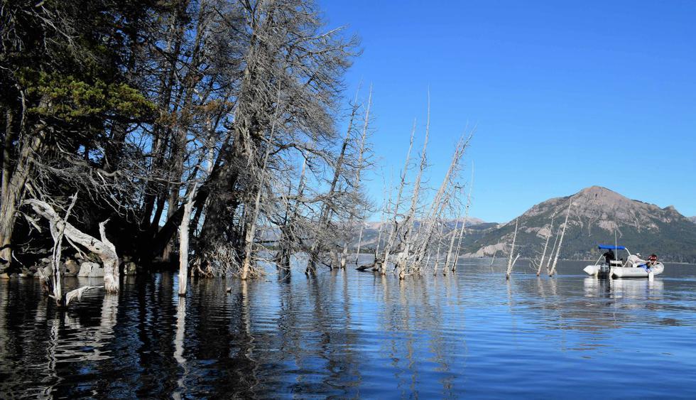 Un bosque argentino, de atractivo turístico a potencial causa de un tsunami. (Foto: EFE)