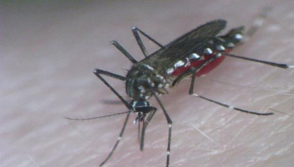 Descubren proteína responsable del dengue hemorrágico