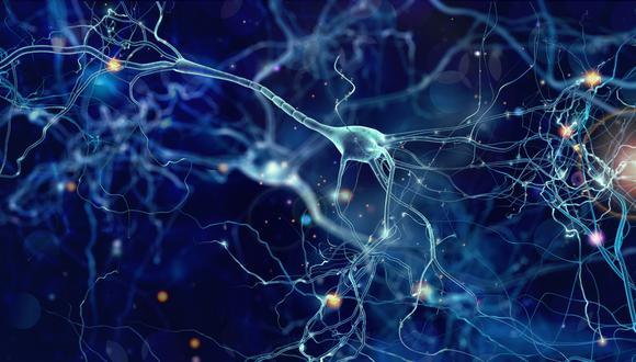 Uno de los grandes interrogantes de la medicina era cómo mantienen las células su identidad de una generación a la siguiente. (Ilustración: Shutterstock)