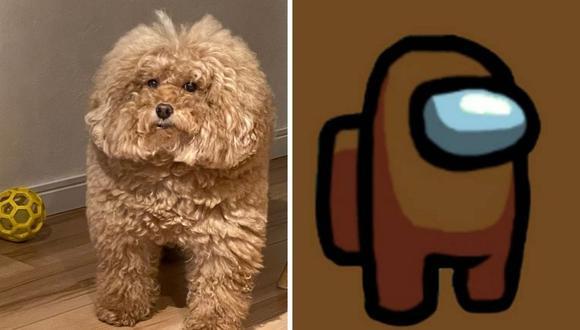 El can, cuyo nombre todavía es un misterio, causó revuelo en las redes sociales. (Foto: @shiki_ads | Twitter | InnerSloth)