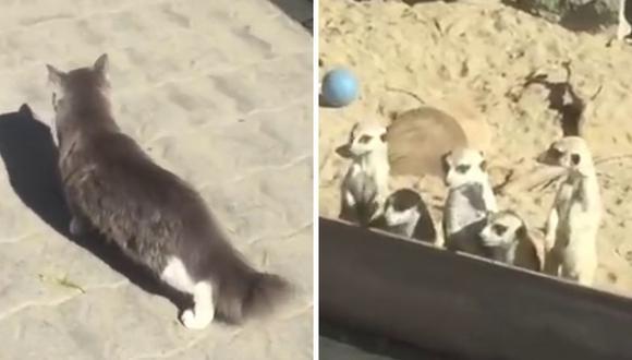 Las suricatas mostraron una reacción que a muchos usuarios en YouTube causó gracia. (Foto: RT en Español | YouTube)