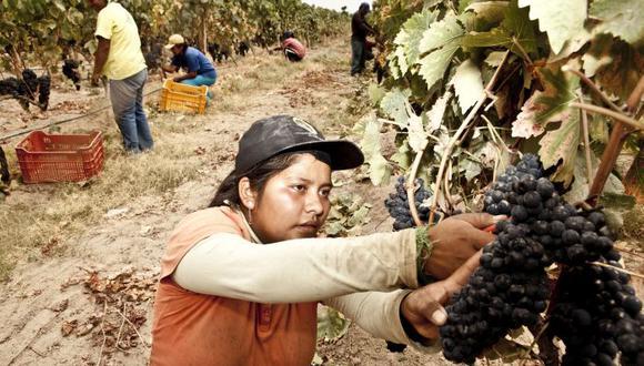 La agroindustria es uno de los motores de la economía de la región Ica.