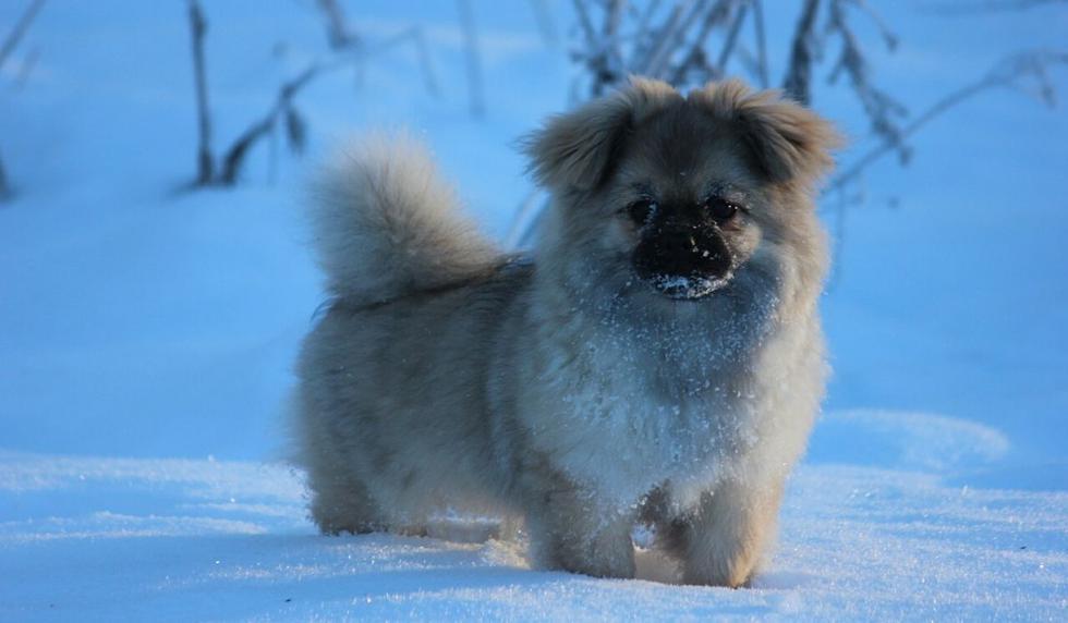 El clip del perro fue compartido hace poco. (Foto referencial: Pixabay)