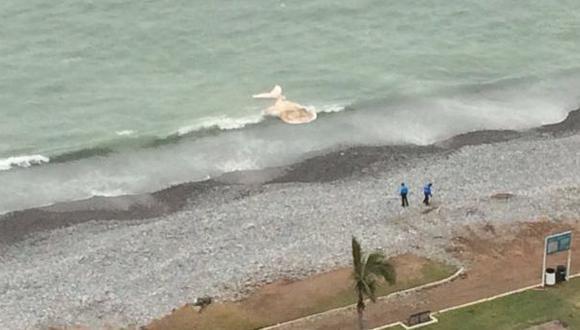 Miraflores: restos de una ballena aparecieron en playa Redondo