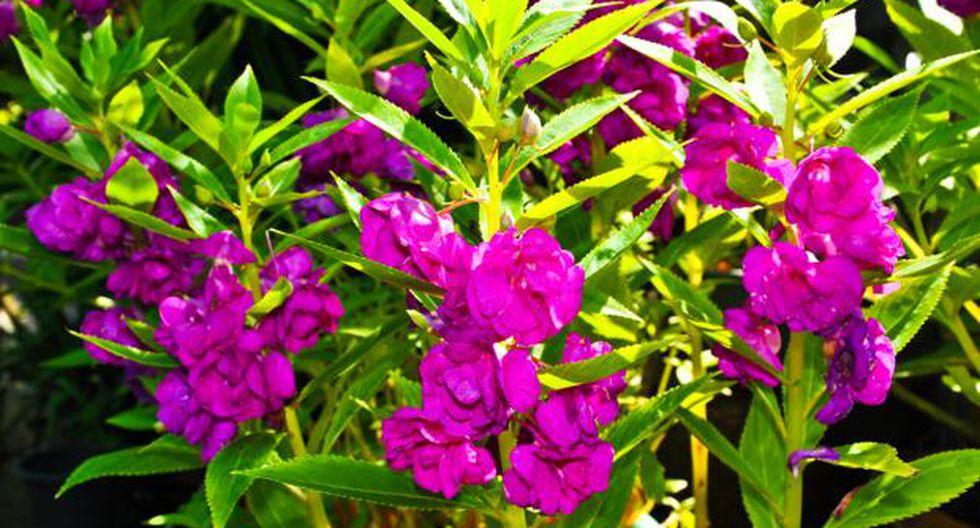 Los productos químicos pueden ocasionar el deterioro de la planta. (Foto: Shutterstock)