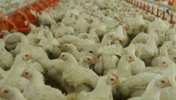 El pollo de cada día, por Rolando Arellano