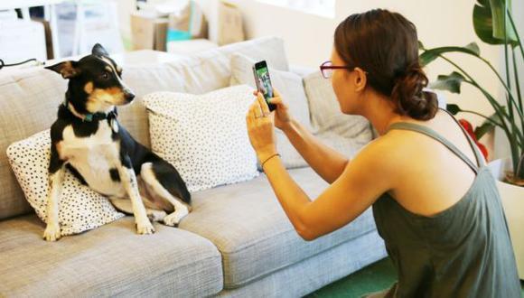 Esta app ladra y maúlla para que tu perro salga bien en la foto