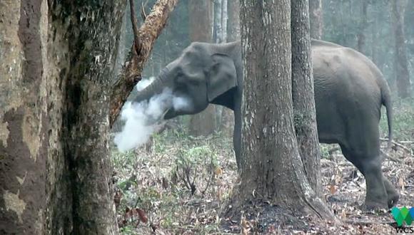 El video lo grabó Vinay Kumar, el director asociado de la Sociedad para la Conservación de la Vida Silvestre de India, en abril de 2016. (Foto: cortesía de WCS)