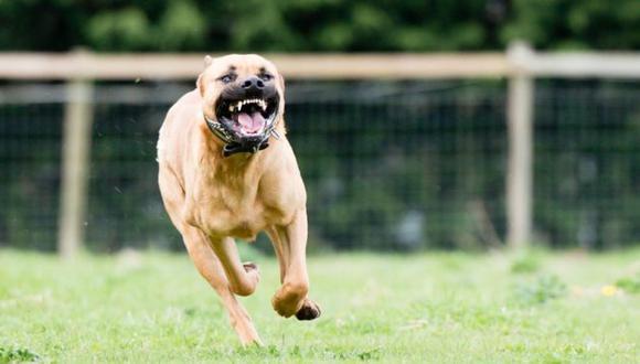 Las mordeduras de perros pueden causar significativas lesiones físicas y psicológicas. (Foto: Getty)