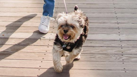Si el perro tira, hay que detenerse hasta que él también pare y la correa quede sin tensión. (Foto: Pexels)