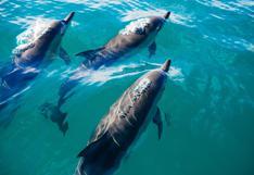 En video   ¿Cómo impacta la contaminación acústica en el océano a las especies marinas? #MongabayExplica