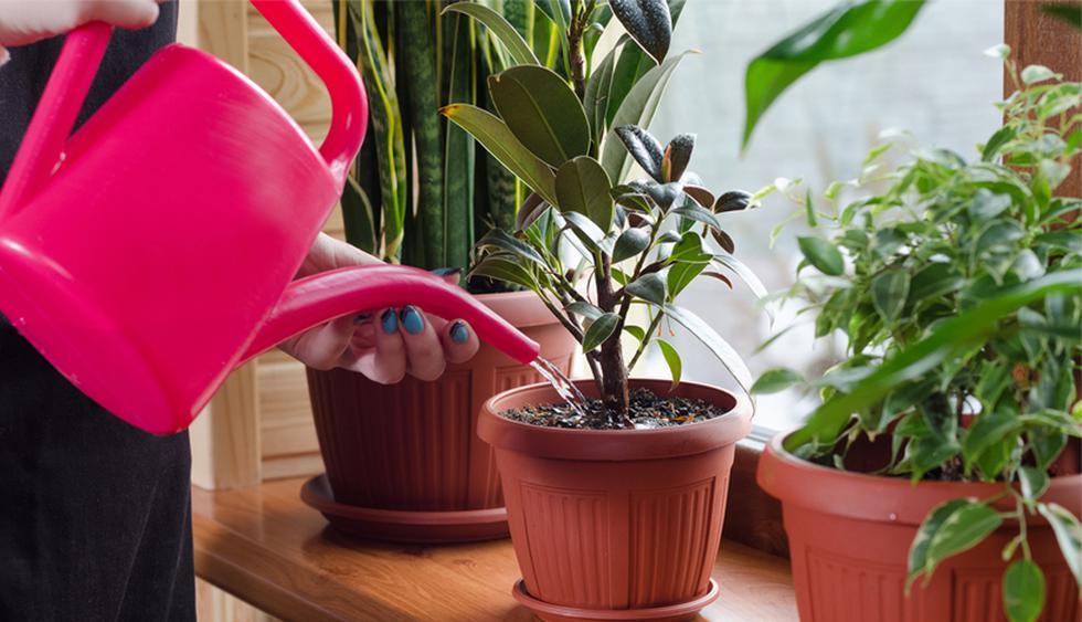 Existen variedades de plantas que, si bien no florecen, se comportan mejor en invierno. (Foto: Shutterstock)