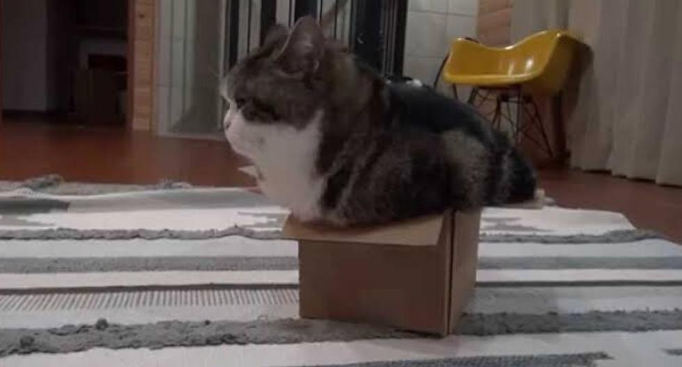 Maru es un gato de Japón que ha logrado un récord Guiness por más de 405 millones de vistas en YouTube. (Foto: YouTube)