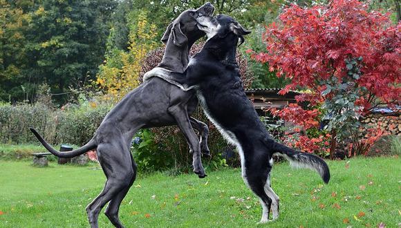 Los dos animales cautivaron a miles de cibernautas de YouTube por cómo se comportaron. (Pixabay)