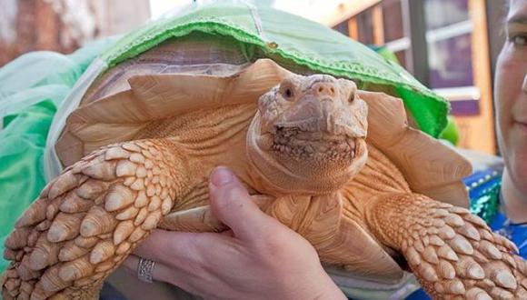 Wasabi, la tortuga 'terapéutica' que mejora la autoestima