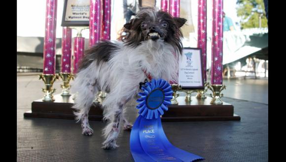 Peanut, de dos años, es el nuevo perro más feo del mundo