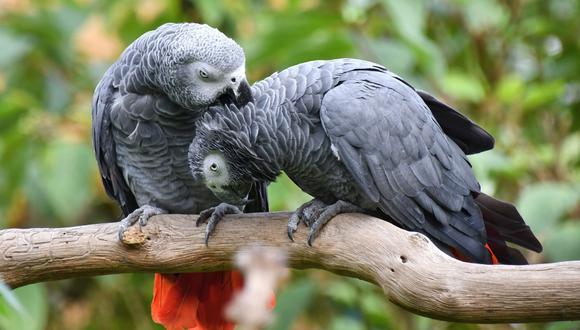 Un experimento demostró la conducta altruista y sofisticada de esta especie del reino animal. (Foto: Pixabay/Referencial)