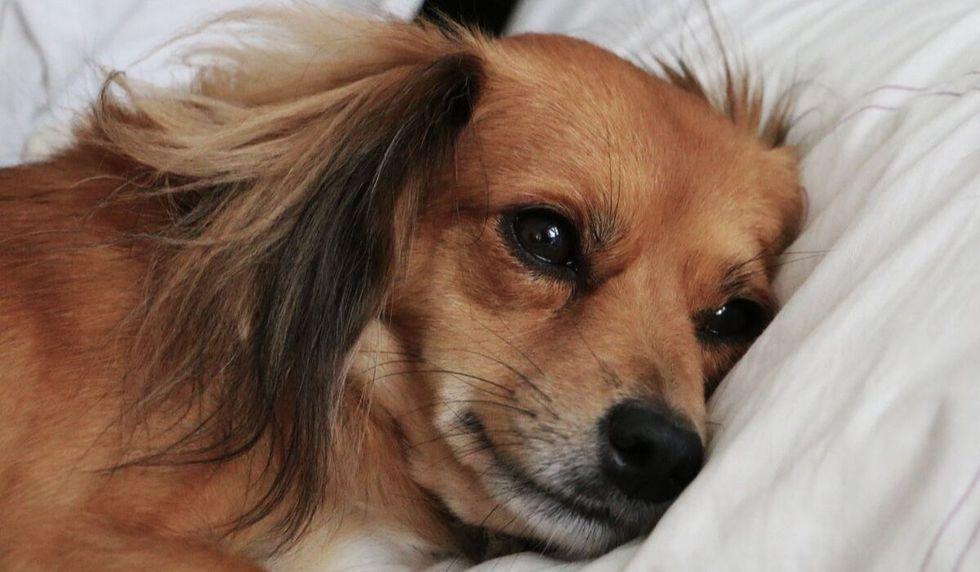 Perro rescatado de la calle gracias al desgarrador mensaje que tenía atado en su cuello