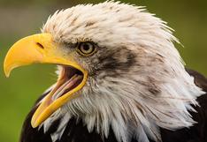 El impactante momento en que un águila ataca a un canguro