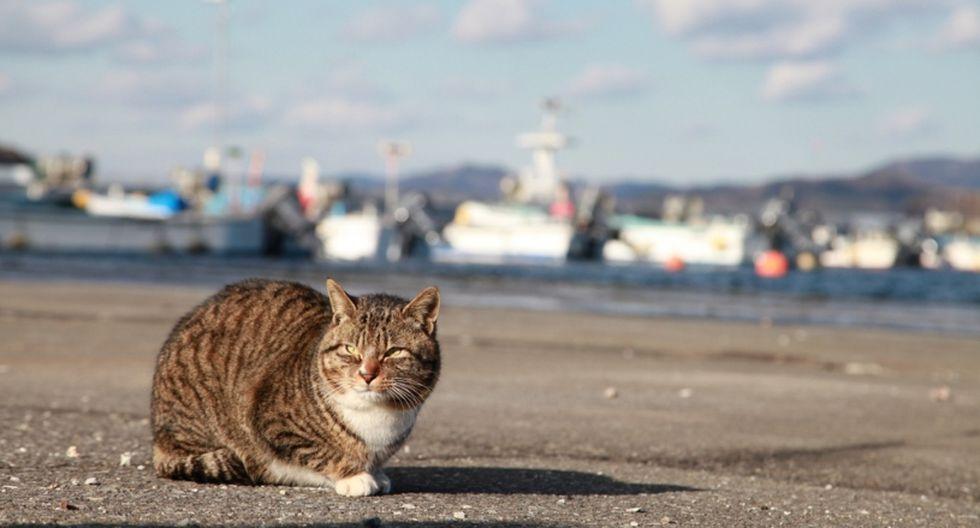 5. Tashirojima (Japón). Esta isla tiene más gatos que humanos. Son tan queridos por locales y turistas que los perros no están permitidos. (Foto: Shutterstock)