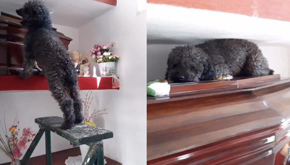 El pequeño Benito permanece así cada vez que visita la cripta de su mamá Joha, quien falleció hace cuatro años.| Foto: @Bele_dure