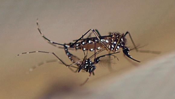 OMS publica manual técnico para ayudar a erradicar la malaria