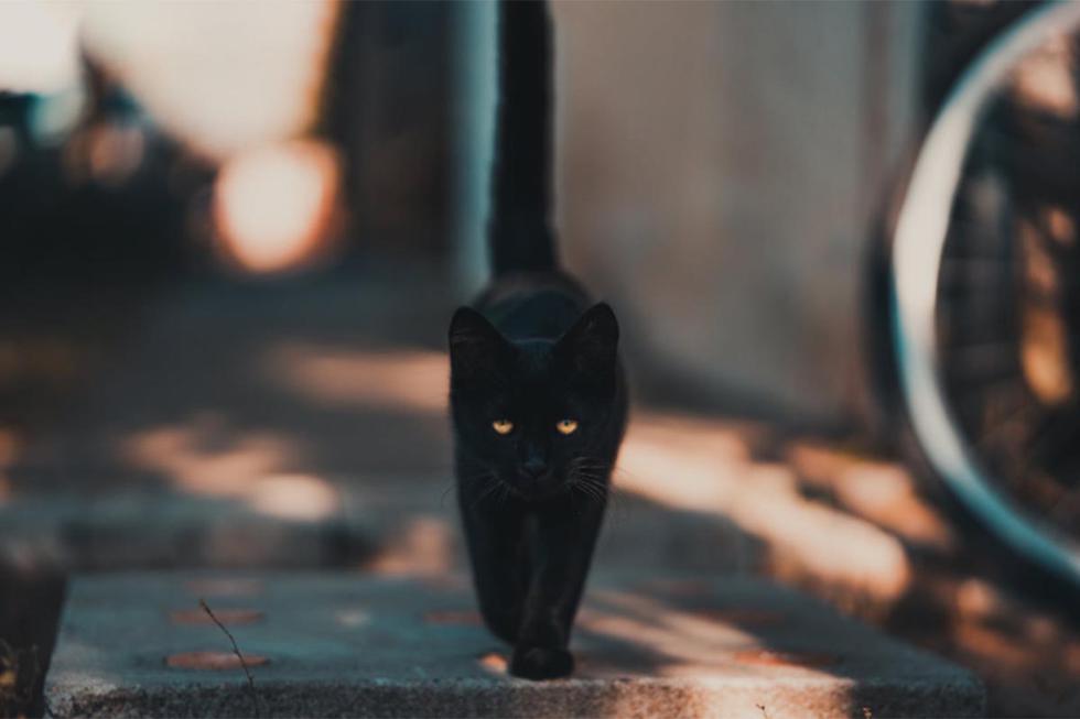 El clip de un hago maullando de manera espeluznante es viral en redes sociales.| Foto: Pexels/Referencial