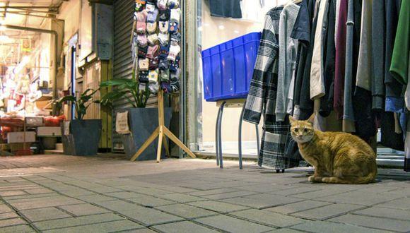 El felino se robó el corazón de los usuarios tras ser captado aprovechando el más mínimo descuido del negociante para quedarse con un pez. (Foto: Referencial/Pixabay)