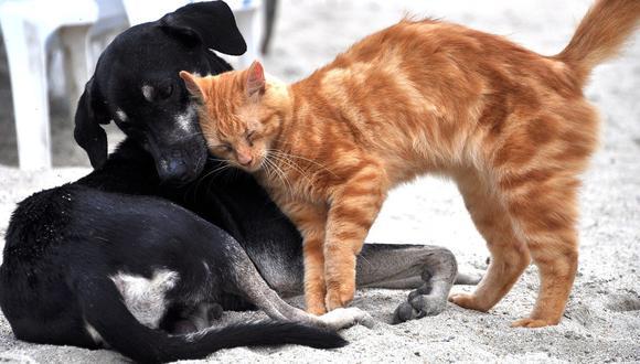 El coronavirus también puede estar presentan en mascotas. (Imagen referencial: Pixabay)