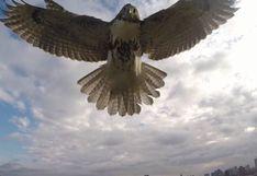 YouTube: águila derriba a drone