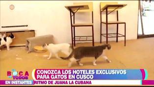 Conoce todos los hoteles exclusivos para gatos en Cusco