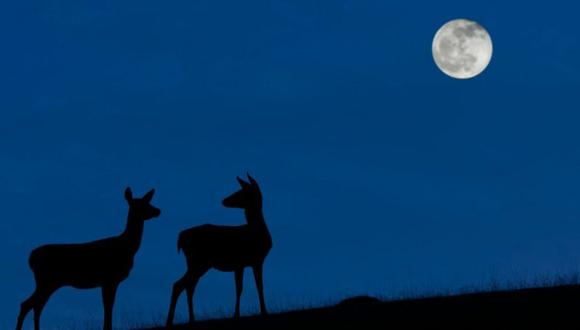 """El mejor momento para ver la """"Luna azul"""" será cuando la noche del 31 de octubre sea más oscura y el cielo esté despejado. (GETTY IMAGES)"""