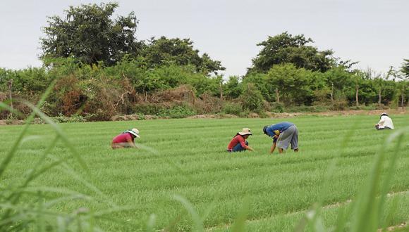 """""""Es importante promover la organización de agricultores familiares a través del desarrollo de una estrategia con enfoque territorial que considere la diversificación de cultivos y emprendimientos""""."""