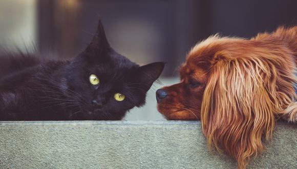 Hasta la fecha, el consenso entre los diversos especialistas es que ni los perros ni  los gatos se infectan fácilmente con el nuevo coronavirus. (Foto: Pixabay)