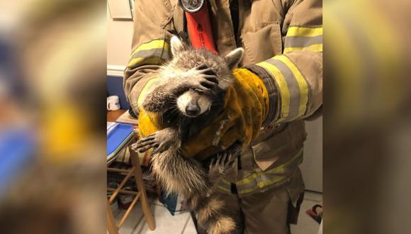 La foto de un mapache 'avergonzado' luego de ser rescatado por unos bomberos es lo más tierno que verás hoy (Foto: Facebook)