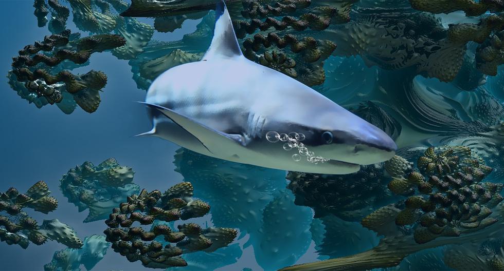 Captan el espeluznante momento en que un tiburón se devora a otro escualo en un zoológico de Bélgica y el video se hizo viral en YouTube. (Foto referencial: Pixabay)